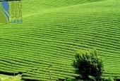 Chính chủ bán 960,7m2 đất Chiềng Sơn- Mộc Châu