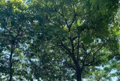 Hiếm, Bán Ngôi Nhà Siêu Đẹp Phố Từ Hoa, Tây Hồ, 120m, Mặt Tiền 6.8m, giá 23.5 tỷ