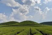Đất thị trấn Nông Trường Mộc Châu thích hợp làm homestay, farm cho các nhà đầu tư khai thác du lịch và nông nghiệp 4 mùa