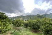 Cần bán mảnh đất gần 7000m2 Mộc Châu có rất nhiều cây ăn quả