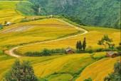 LÔ ĐẤT 400M2 THÔN LAO CHẢI Y TÝ - VIEW RUỘNG BẬC THANG SIÊU ĐỈNH